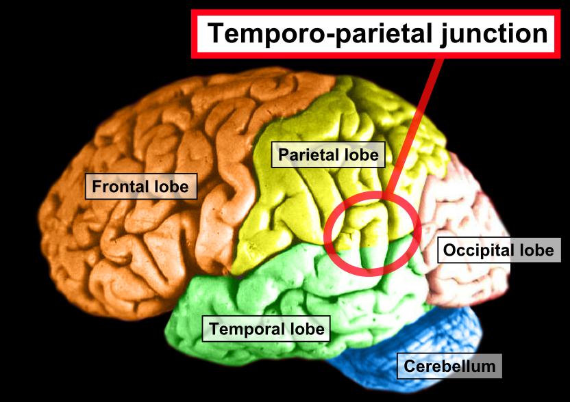 temporo-parietal-brain-region