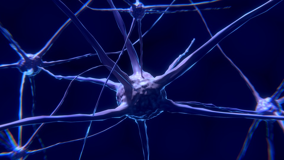 neurons-connections